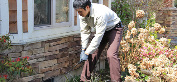 6 Tips For Keeping Spring Pests Away - Home Information Guru.Com