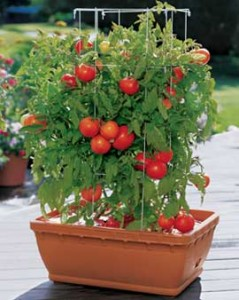 home information-container gardening-home improvement ideas