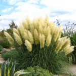 home information-drought tolerant plants-home improvement ideas