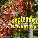 home information-calendar-home improvement ideas
