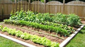 home information-gardening-home improvement ideas
