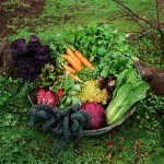home information-organic gardening-home improvement ideas