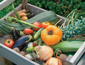 home information-vegetable gardening-home improvement ideas