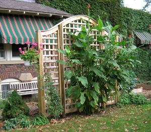 Using Trellises And Vines As Simple Garden Accents Home