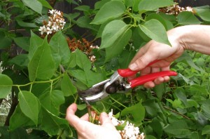 home information-pruning-home improvement ideas