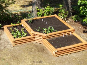 How to plant in a raised garden bed home information for Raised veggie garden designs