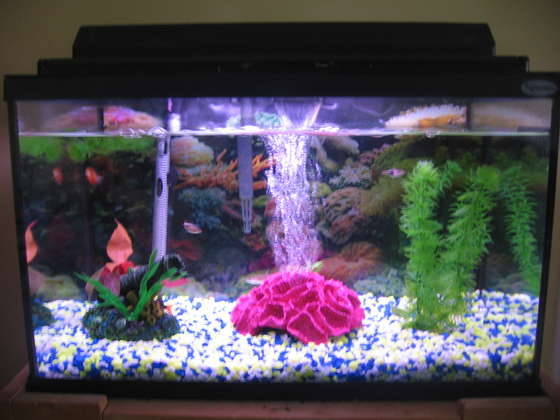 How Fish Tanks Can Add To The Ambiance Of Your Home Home
