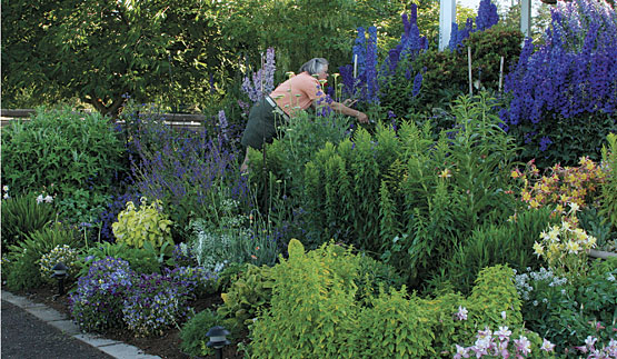 Choosing the Right Perennial Flowers and Plants for Your