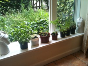 Home information about windowsill herbs