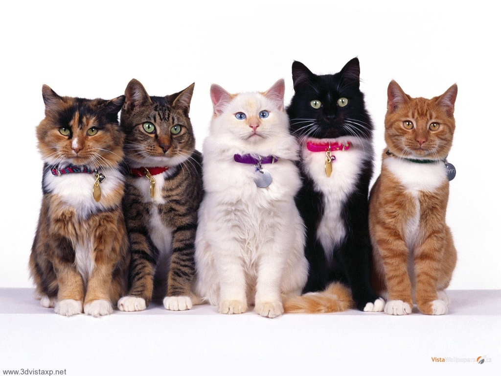 pet cats- household pet articles-home information guru