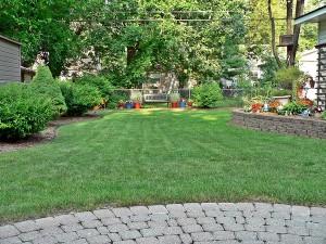 Backyard 7