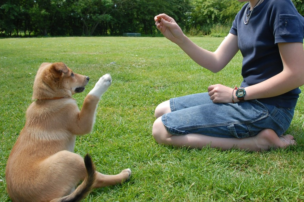 5-How-to-Train-a-Dog