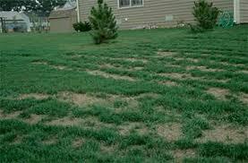 Lawn Care Problems