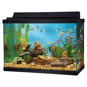 Benefits of aquarium fish on our health home information for Fish tank top