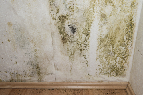 How To Address Moisture Problems In Your Bathroom And Home Home Information